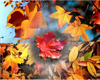 Autumn Leaves Blended Collage